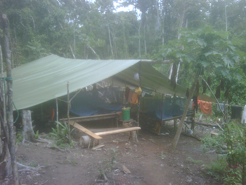 Using LLINs in a forestry shelter in Papua New Guinea (Source - Montrose)