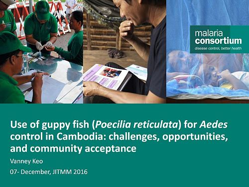 Photo for: Use of guppy fish for Aedes control in Cambodia: Challenges, opportunities and community acceptance