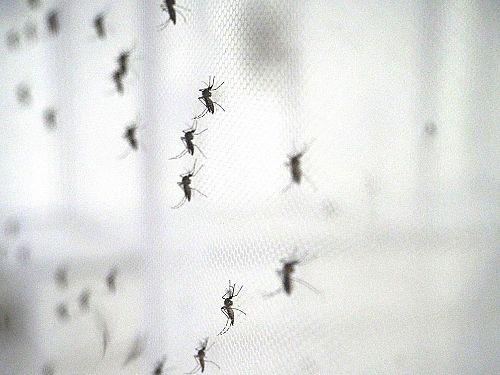 Photo for: Malaria Consortium webinar discusses the rising global threat of arboviruses