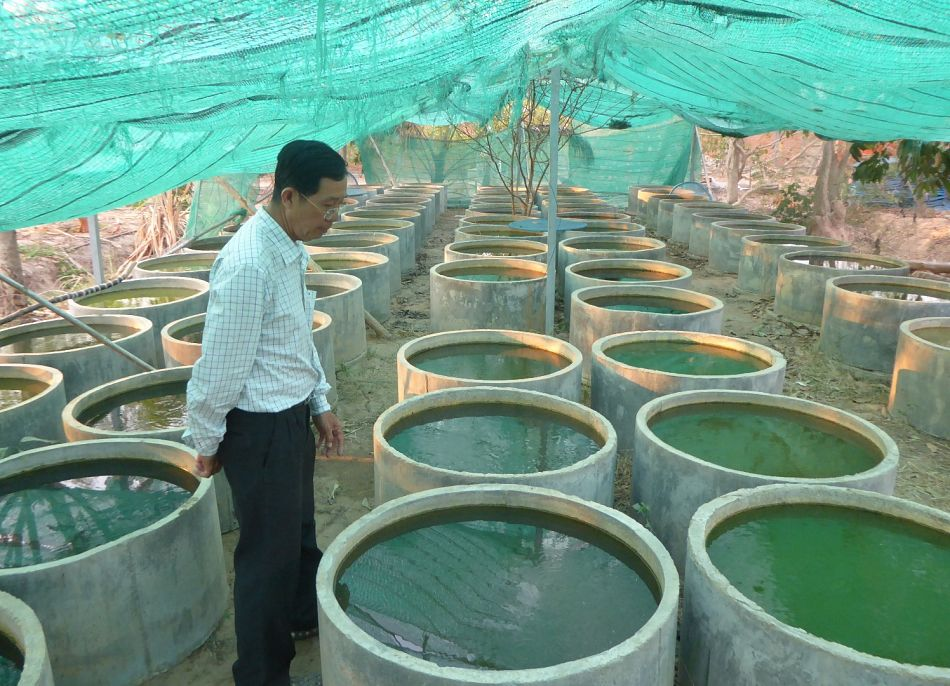 pFor large water storage containers the use of guppy fish Poecelia reticulata to reduce dengue vector populations has shown promise In Cambodia and Laos it has been demonstrated that the use of guppy fish is a lowcost sustainable and effective approach to reduce dengue vector populationsp