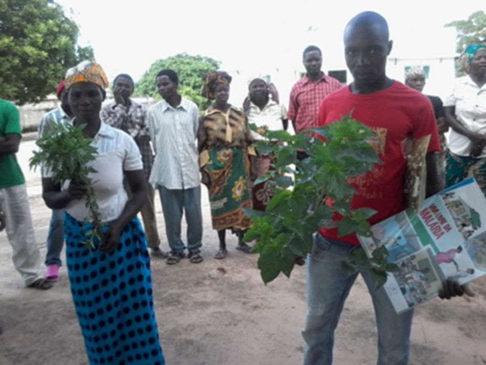 pMembers of thenbspNamitatar community structure demonstrate the use of plants in their community as mosquito repellent during the malaria prevention workshop in the district of Mossuril Mozambiquep